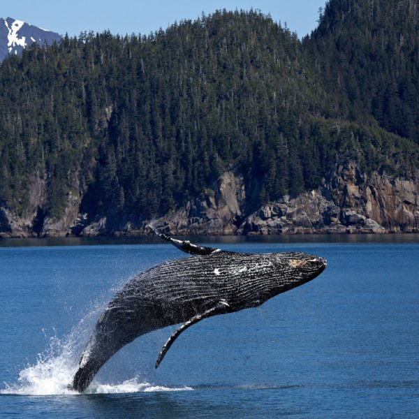 Sustainable Inspiration Whale jumping