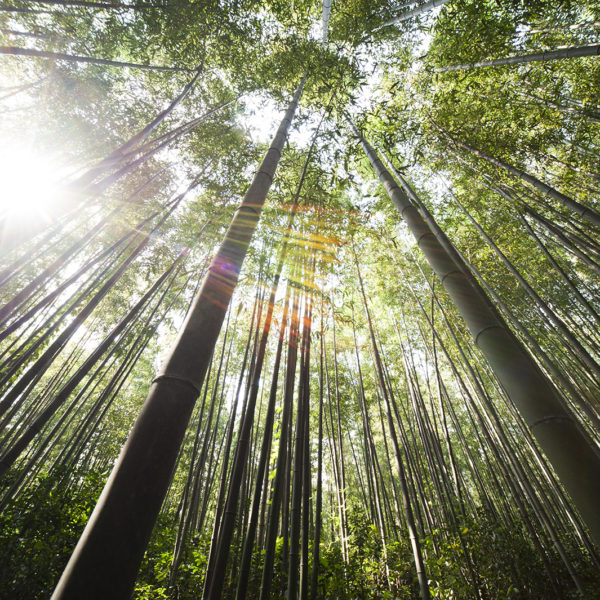 Great Sustainable Opportunity - bamboo
