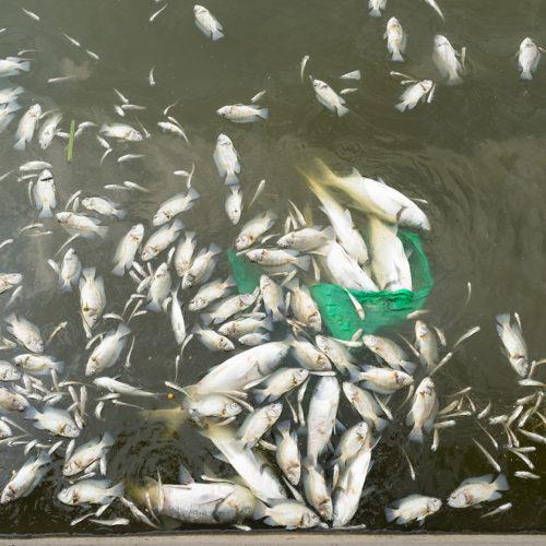 Sustainable Inspiration deadfish