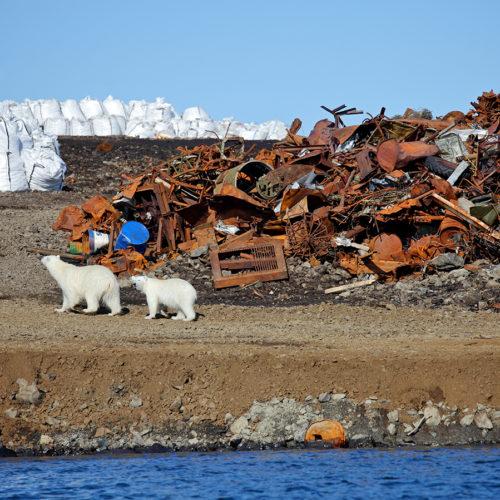 Sustainable Inspiration polarbear